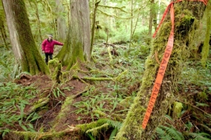 Photo of Cortes Island Forest by TJ Watt courtesy of Ancient Forest Alliance
